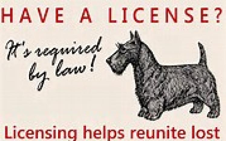 2021 Dog Licenses now available!